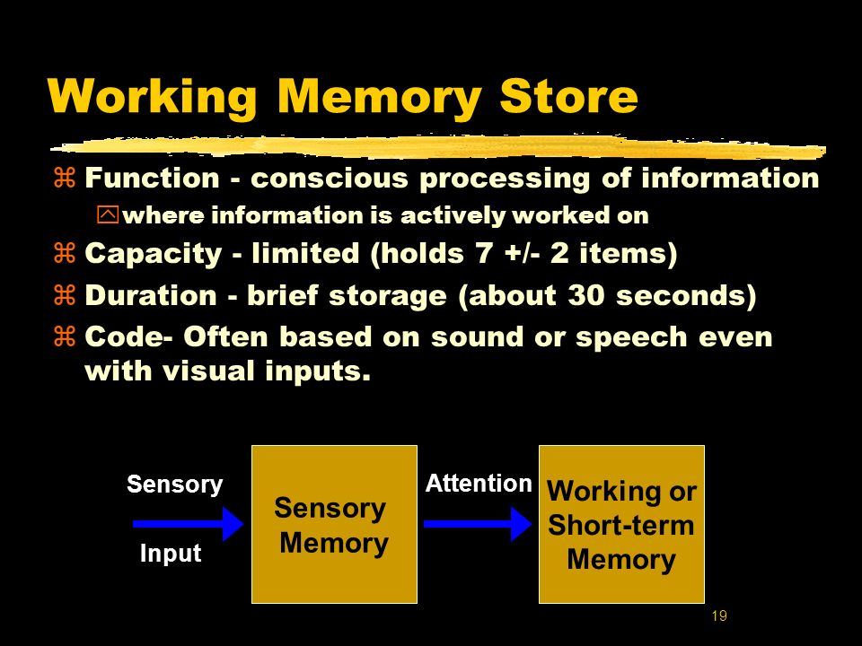 Working Memory Store Function - conscious processing of information
