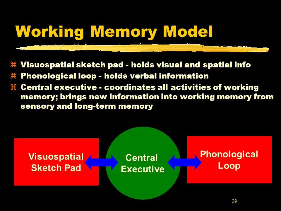 Working Memory Model Central Phonological Visuospatial Executive Loop