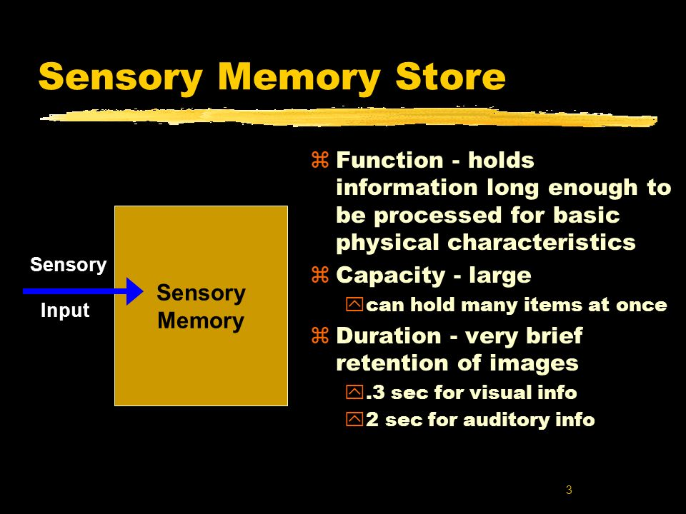 Sensory Memory Store Function - holds information long enough to be processed for basic physical characteristics.