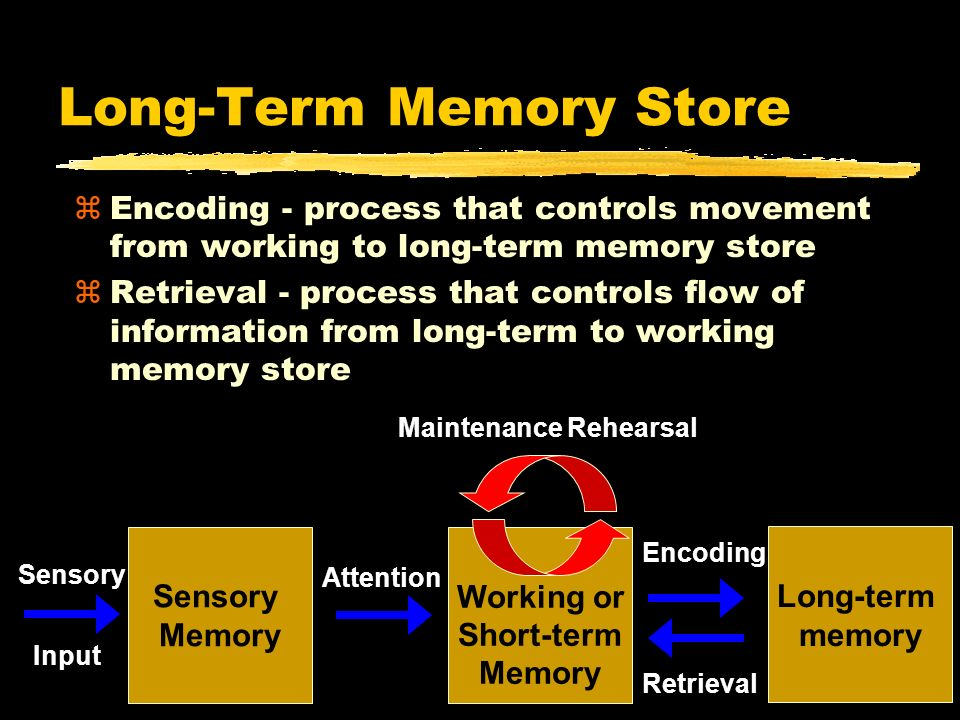 Long-Term Memory Store