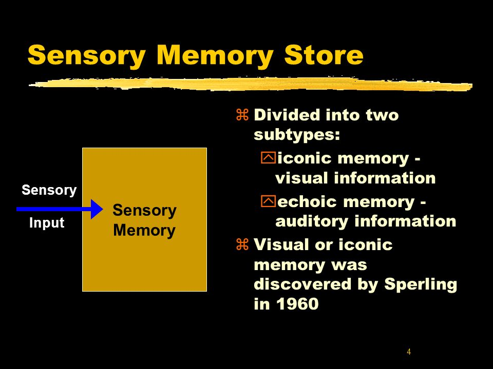 Sensory Memory Store Divided into two subtypes: