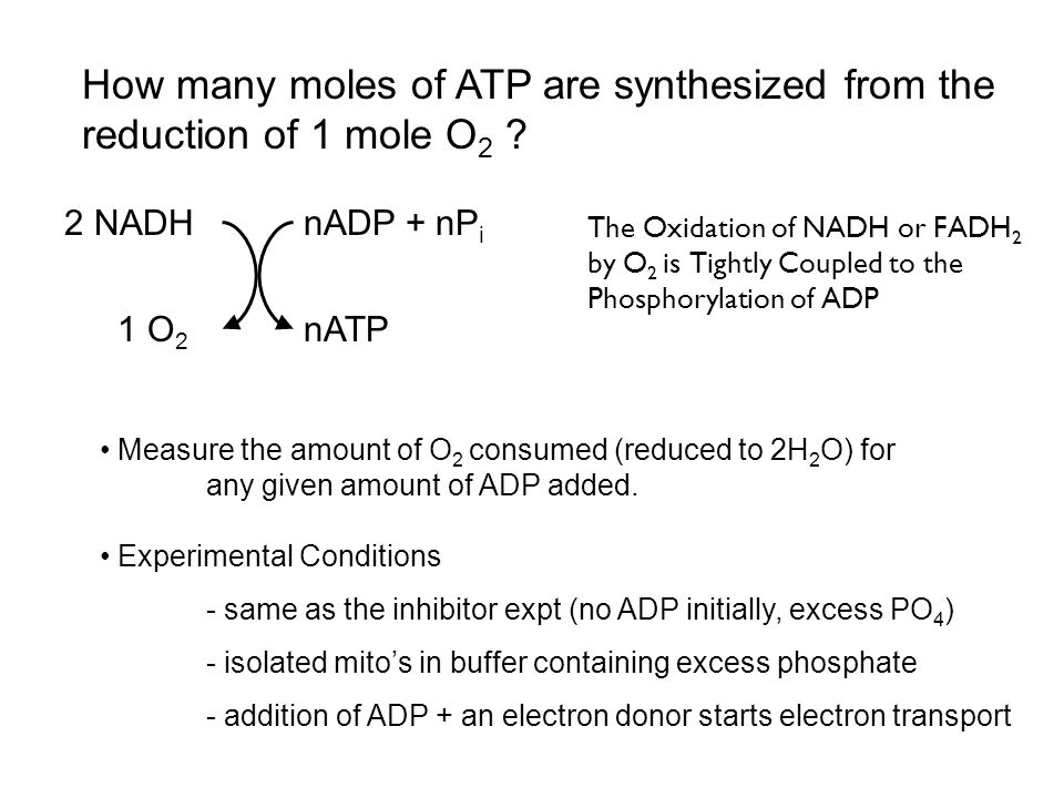 How many moles of ATP are synthesized from the reduction of 1 mole O2