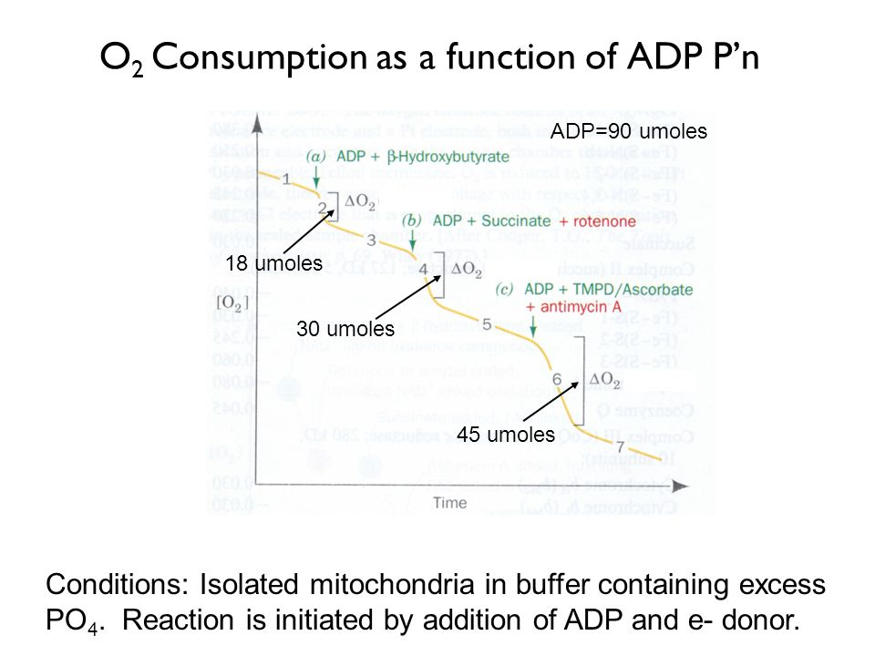 O2 Consumption as a function of ADP P'n