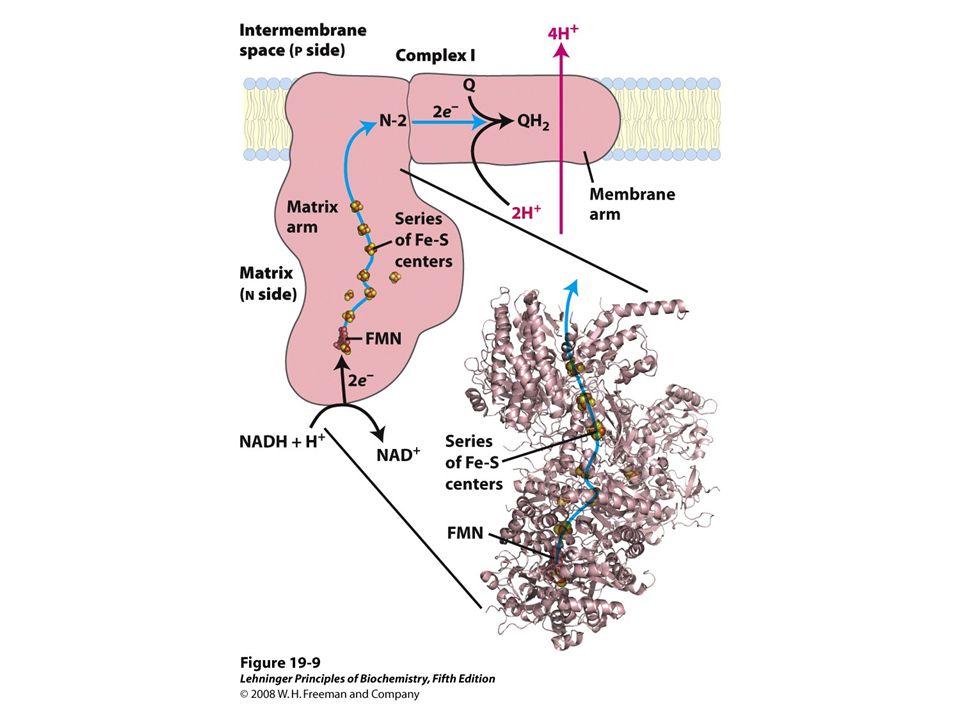 FIGURE 19-9 NADH:ubiquinone oxidoreductase (Complex I)