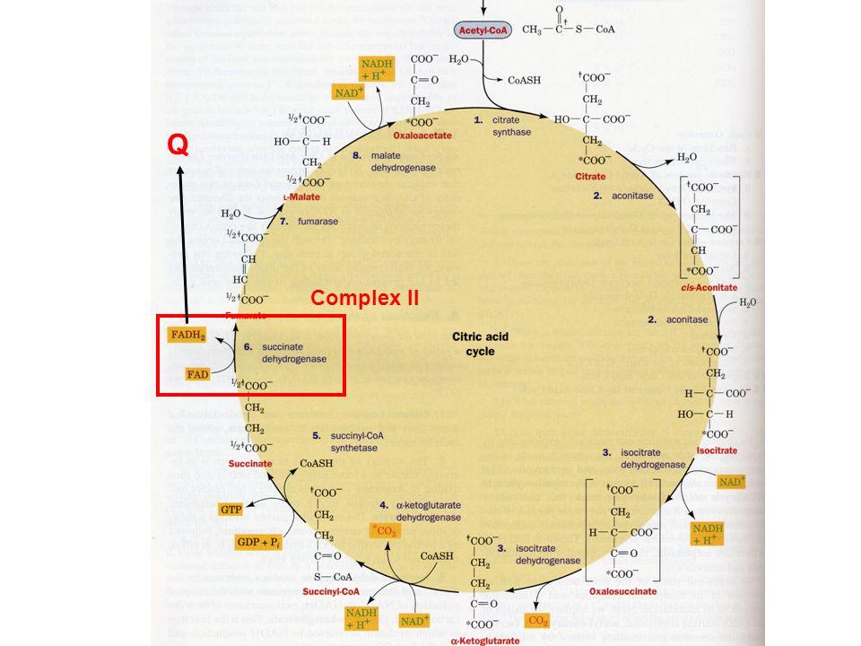 Q Complex II