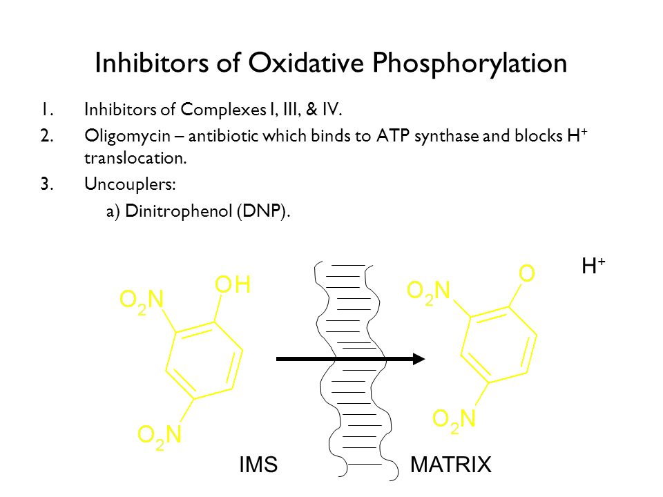 Inhibitors of Oxidative Phosphorylation