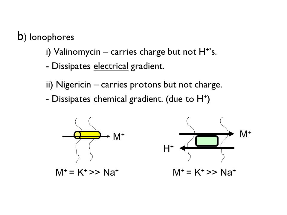 ii) Nigericin – carries protons but not charge.