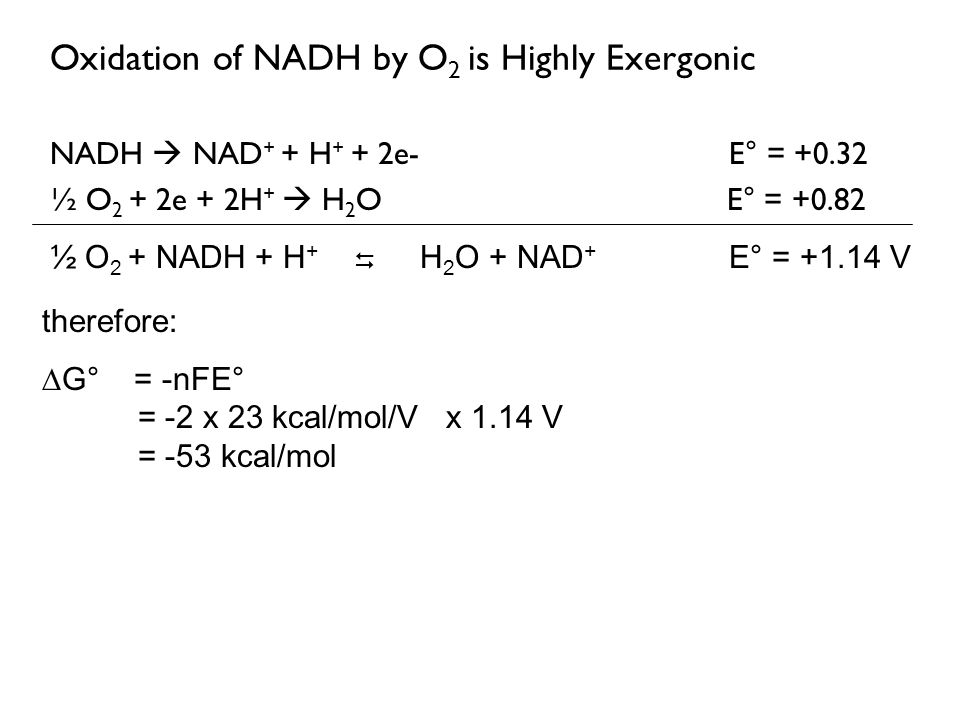 Oxidation of NADH by O2 is Highly Exergonic