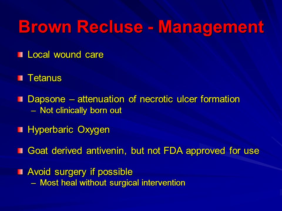 Brown Recluse - Management
