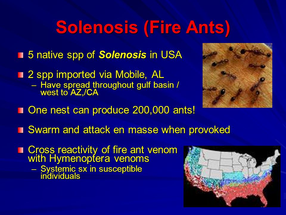 Solenosis (Fire Ants) 5 native spp of Solenosis in USA