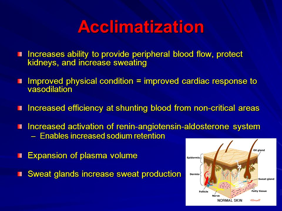 Acclimatization Increases ability to provide peripheral blood flow, protect kidneys, and increase sweating.