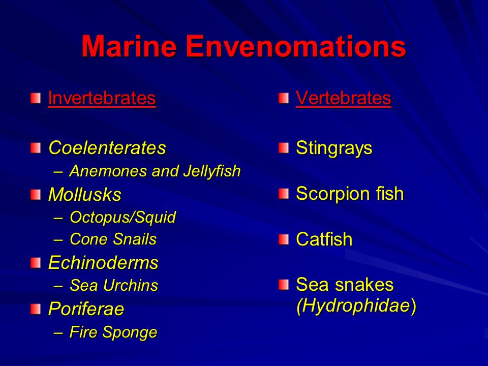 Marine Envenomations Invertebrates Coelenterates Mollusks Echinoderms