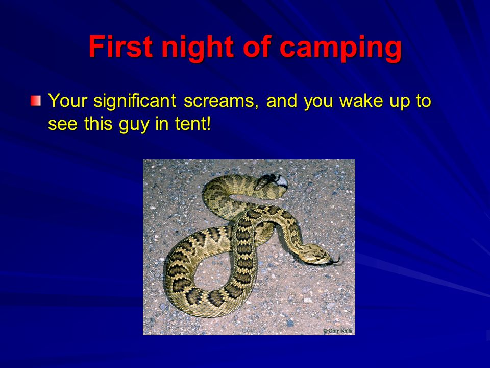 First night of camping Your significant screams, and you wake up to see this guy in tent!