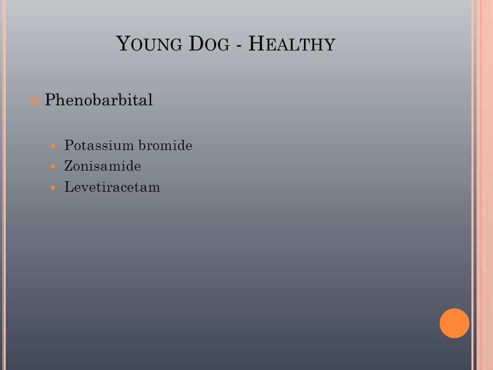 Young Dog - Healthy Phenobarbital Potassium bromide Zonisamide