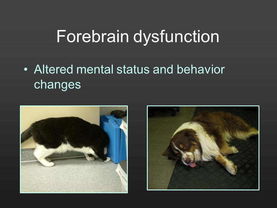 Forebrain dysfunction