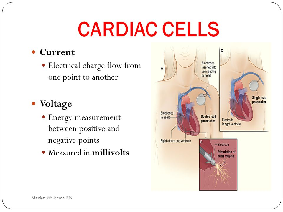 CARDIAC CELLS Current Voltage
