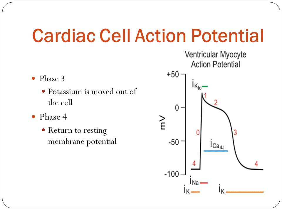 Cardiac Cell Action Potential