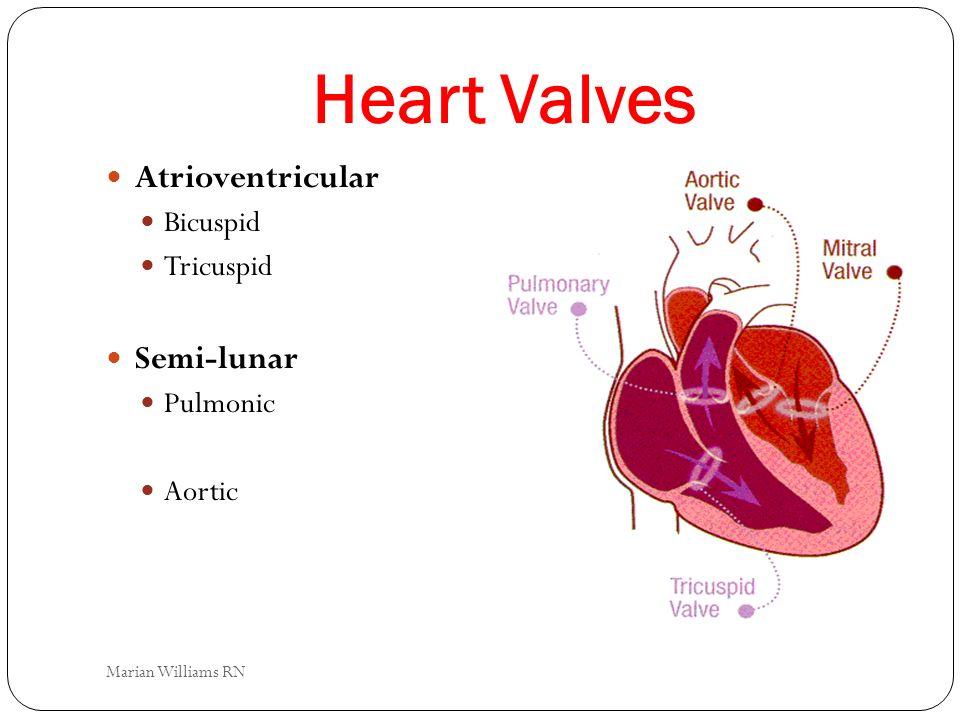 Heart Valves Atrioventricular Semi-lunar Bicuspid Tricuspid Pulmonic
