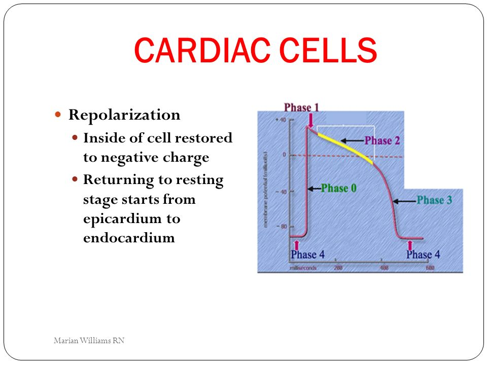 CARDIAC CELLS Repolarization