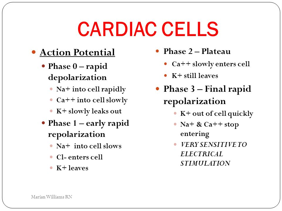 CARDIAC CELLS Action Potential Phase 3 – Final rapid repolarization