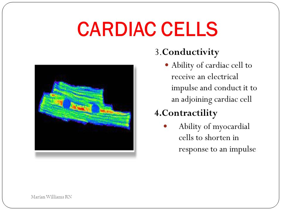 CARDIAC CELLS 3.Conductivity 4.Contractility