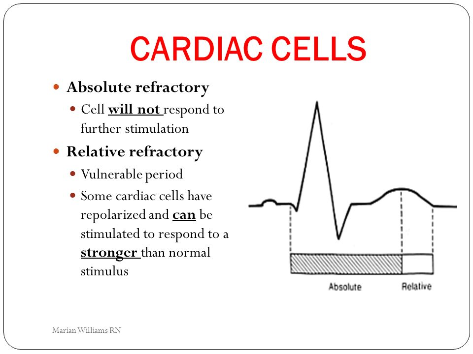 CARDIAC CELLS Absolute refractory Relative refractory