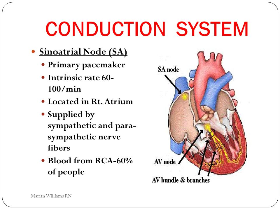 CONDUCTION SYSTEM Sinoatrial Node (SA) Primary pacemaker