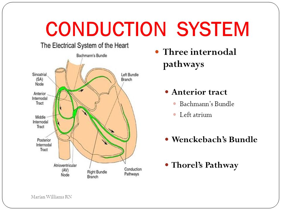 CONDUCTION SYSTEM Three internodal pathways Anterior tract