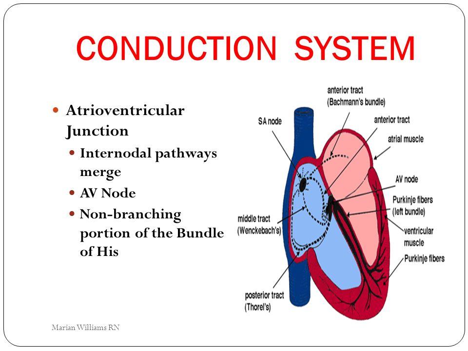 CONDUCTION SYSTEM Atrioventricular Junction Internodal pathways merge