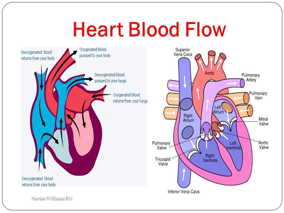 Heart Blood Flow Marian Williams RN