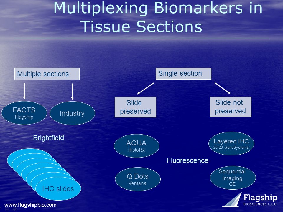 Multiplexing Biomarkers in Tissue Sections