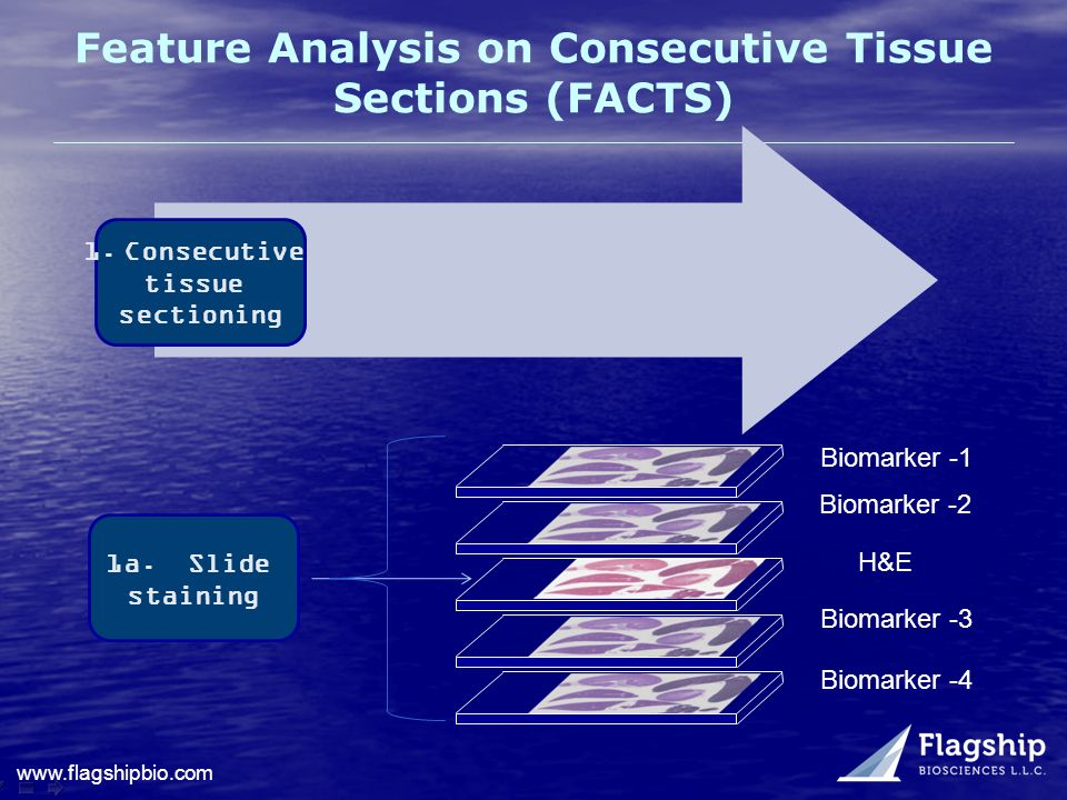 Feature Analysis on Consecutive Tissue Sections (FACTS)