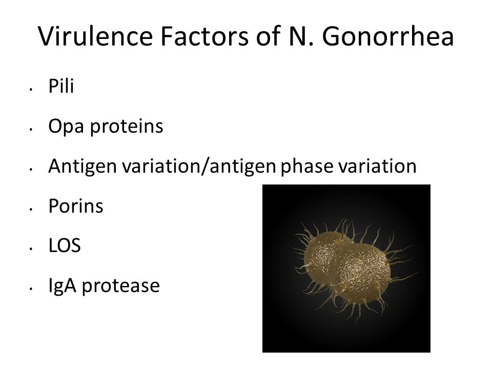 Virulence Factors of N. Gonorrhea