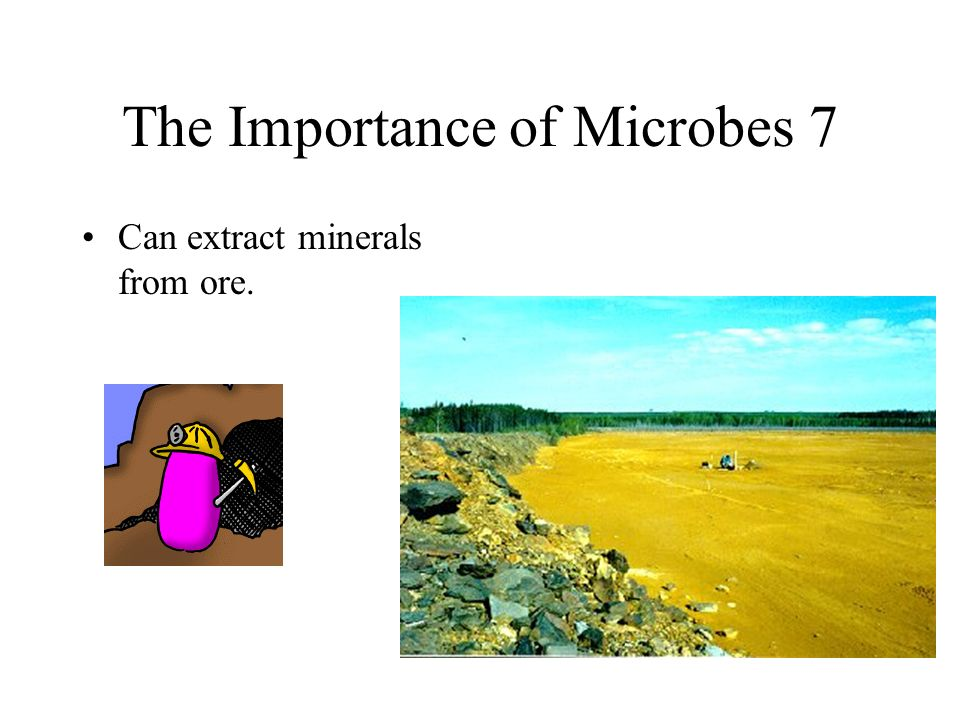 The Importance of Microbes 7
