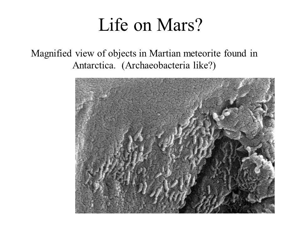 Life on Mars. Magnified view of objects in Martian meteorite found in Antarctica.