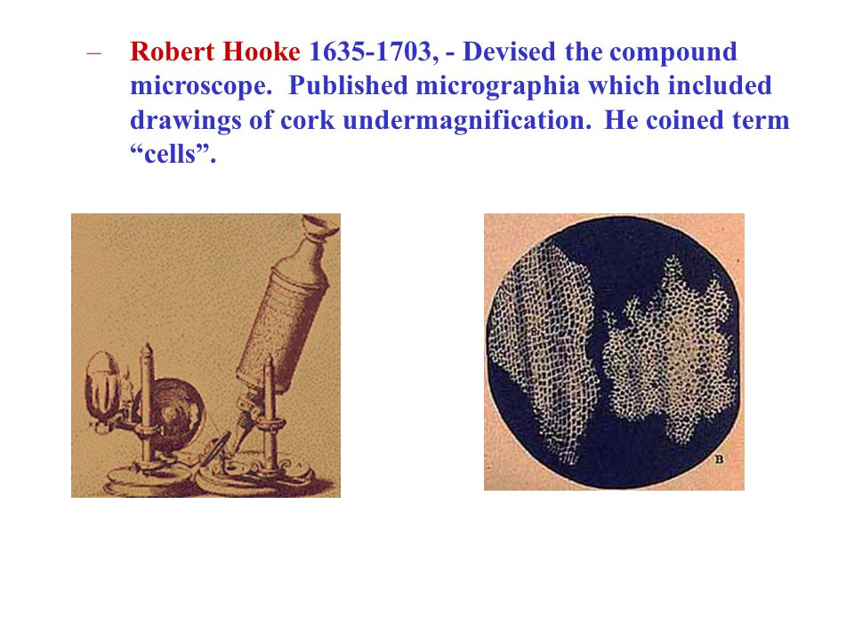 Robert Hooke 1635-1703, - Devised the compound microscope