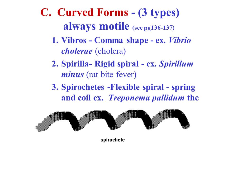 C. Curved Forms - (3 types) always motile (see pg )