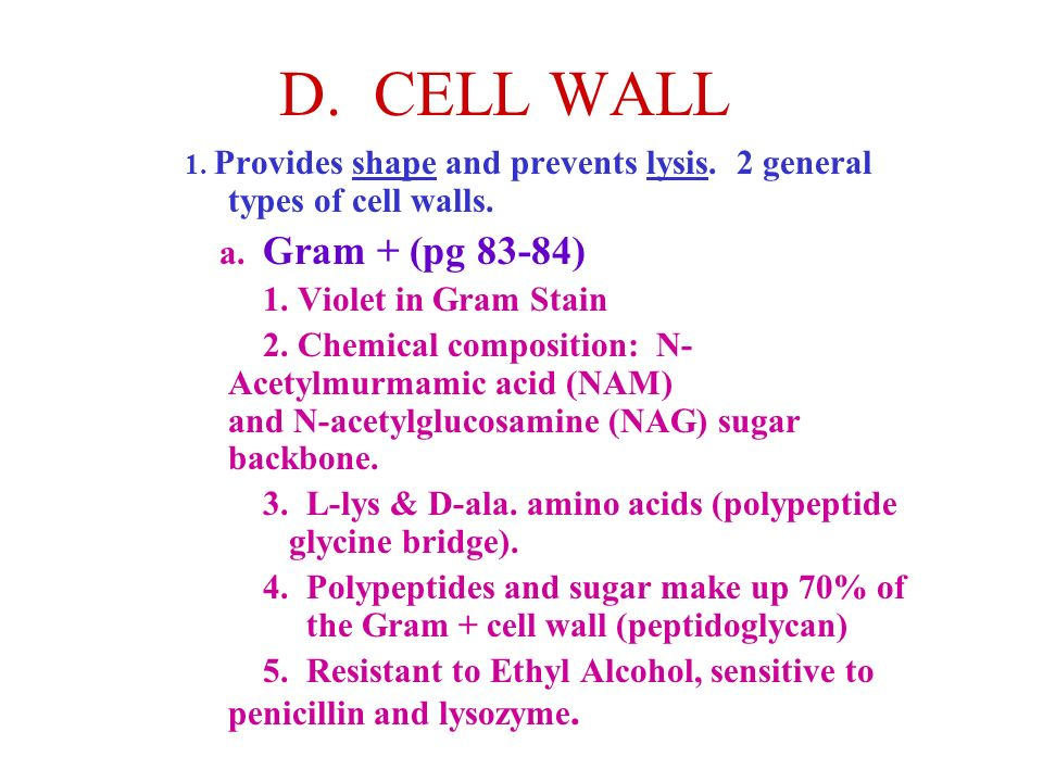 D. CELL WALL a. Gram + (pg 83-84) 1. Violet in Gram Stain