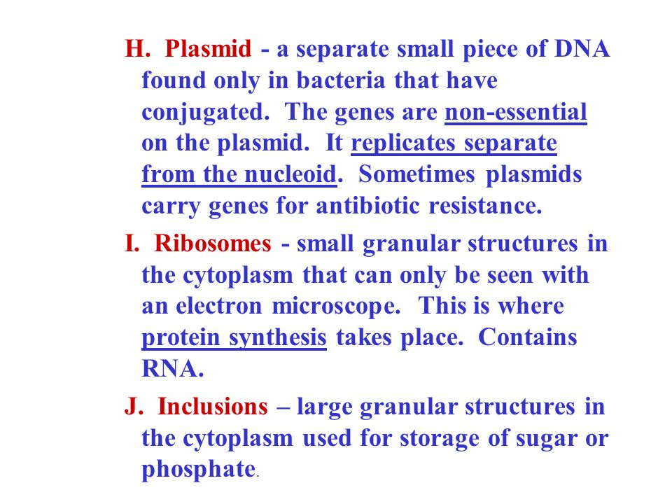 H. Plasmid - a separate small piece of DNA found only in bacteria that have conjugated. The genes are non-essential on the plasmid. It replicates separate from the nucleoid. Sometimes plasmids carry genes for antibiotic resistance.