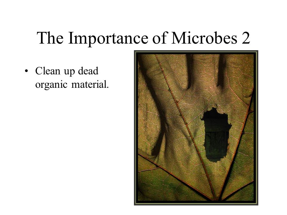 The Importance of Microbes 2