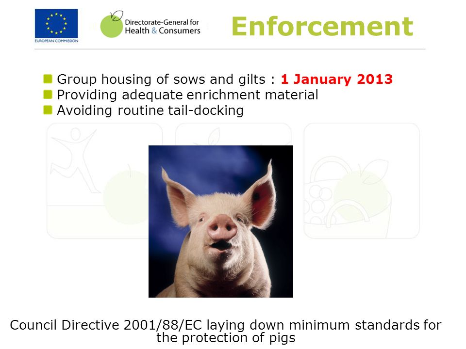 Enforcement Group housing of sows and gilts : 1 January 2013