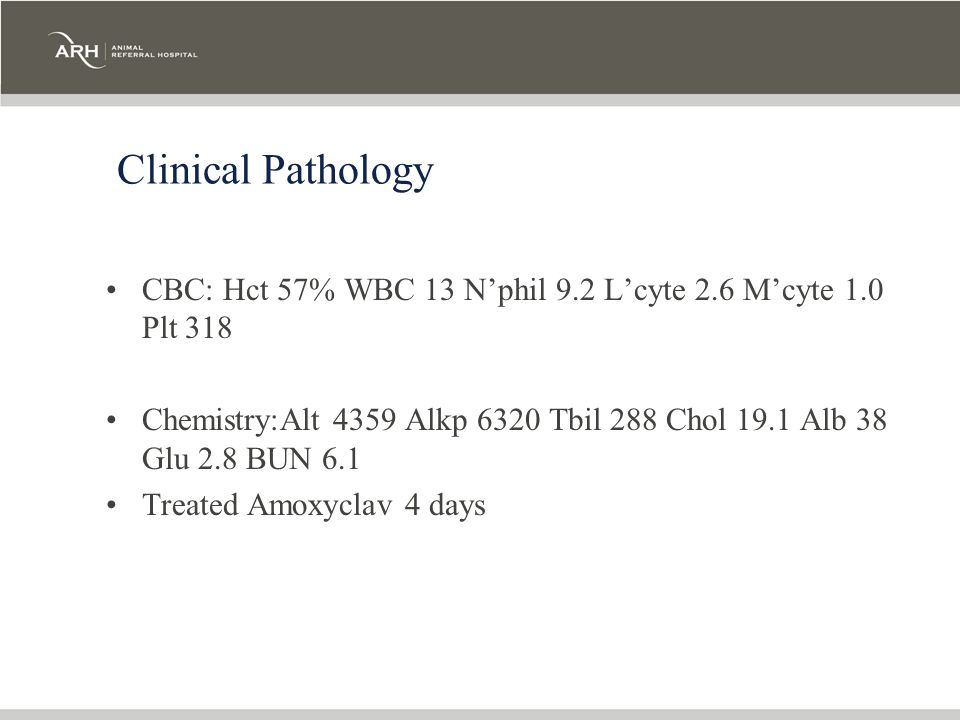 Clinical Pathology CBC: Hct 57% WBC 13 N'phil 9.2 L'cyte 2.6 M'cyte 1.0 Plt 318.