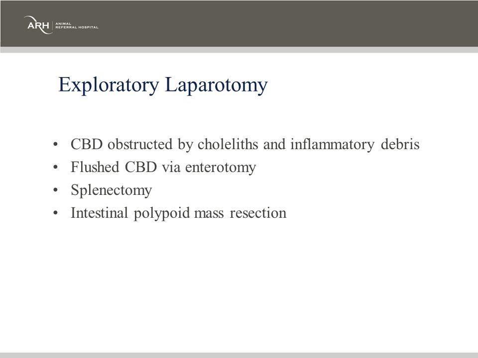 Exploratory Laparotomy