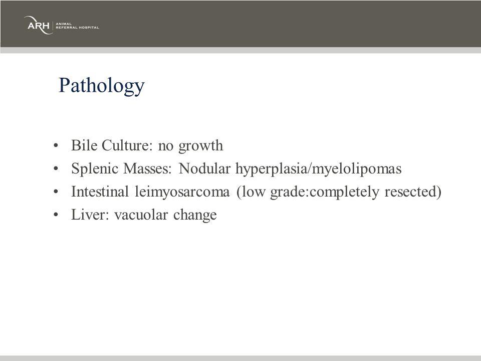 Pathology Bile Culture: no growth