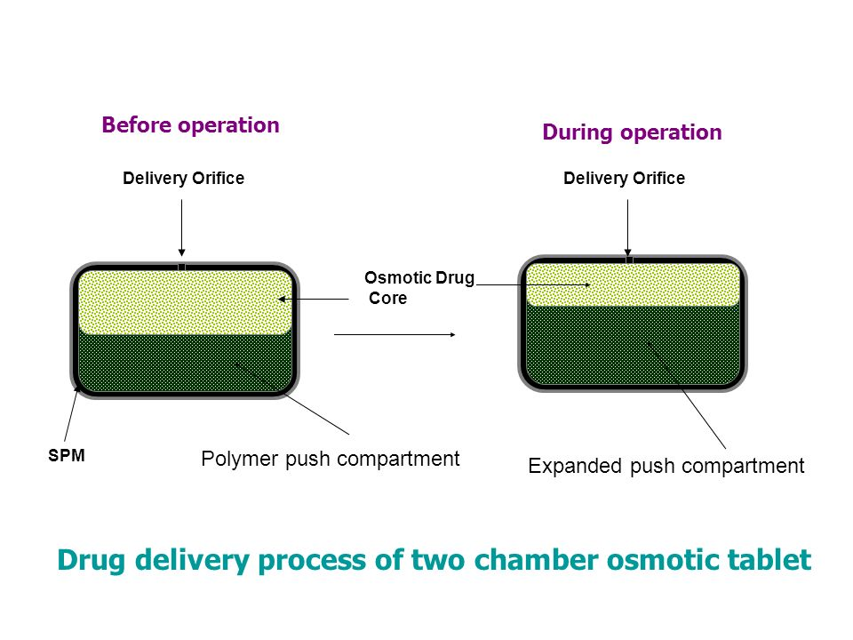 Drug delivery process of two chamber osmotic tablet
