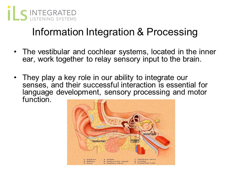 Information Integration & Processing