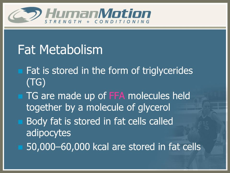 Fat Metabolism Fat is stored in the form of triglycerides (TG)