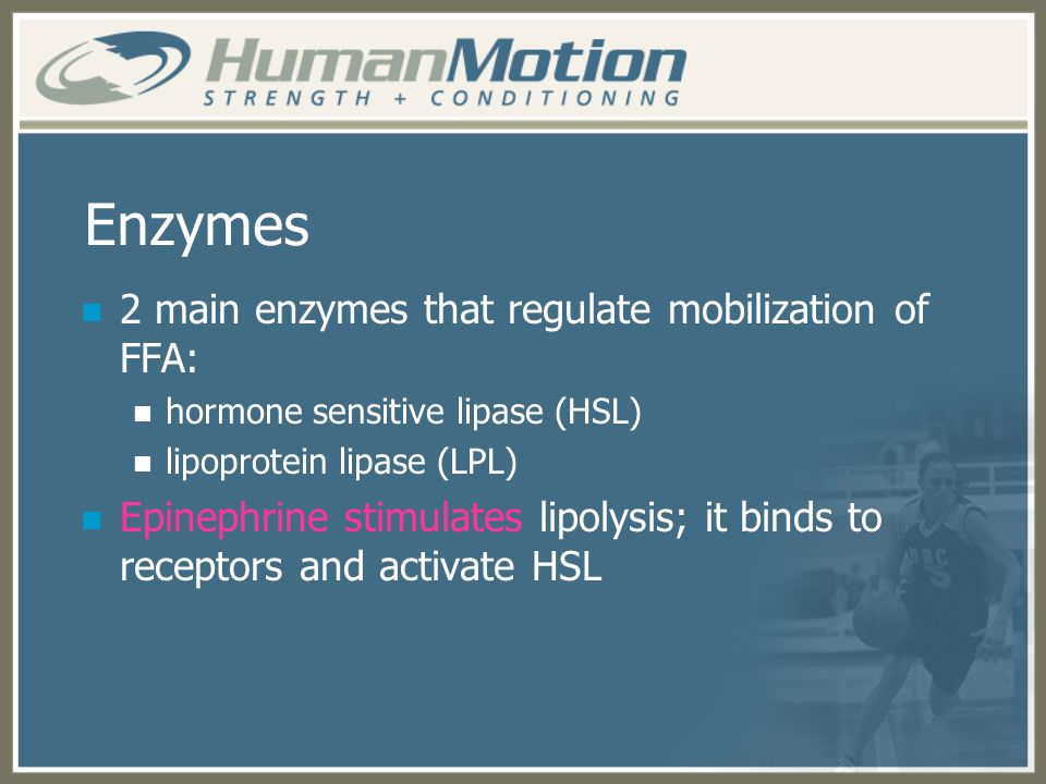 Enzymes 2 main enzymes that regulate mobilization of FFA: