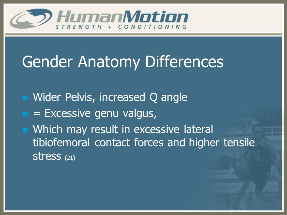 Gender Anatomy Differences