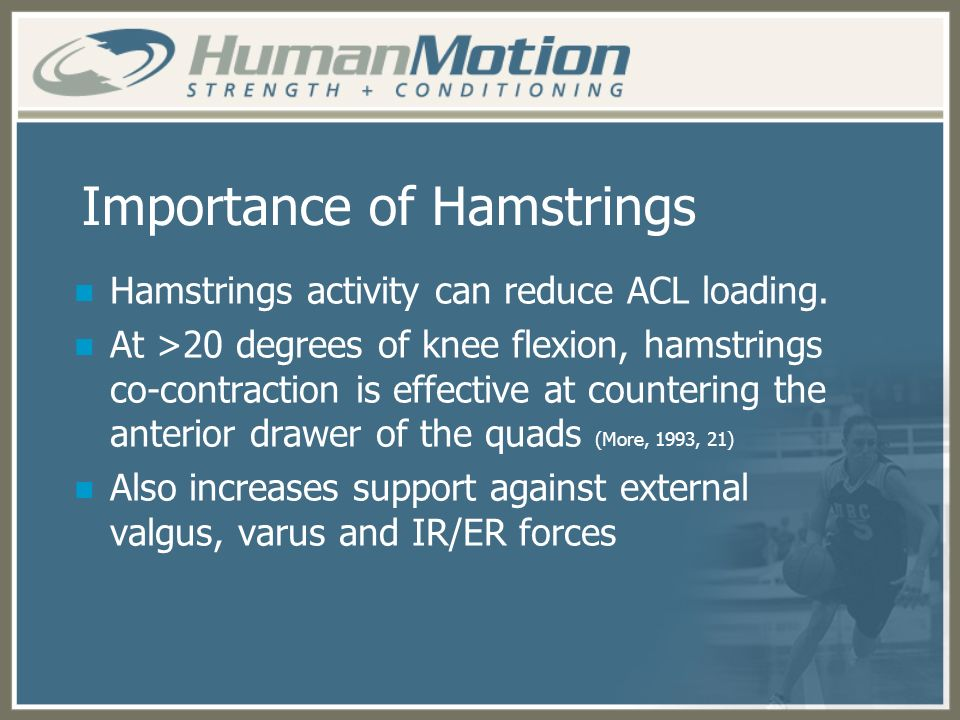Importance of Hamstrings